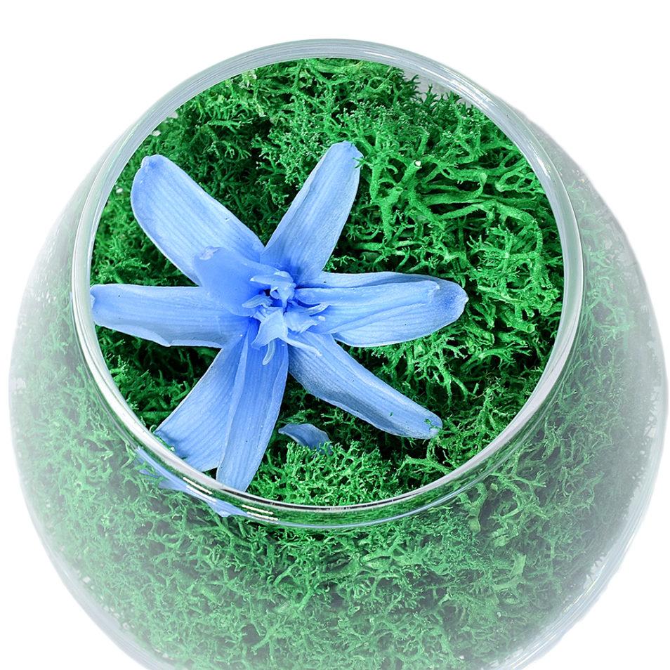 Стабилизированные цветы в стекле неувядающие живые Композиции мох бокал Мириам 2.2.7.1