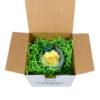 Стабилизированные цветы фирменная коробка купить не дорого в Москве