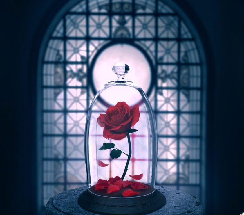 Купить розу в колбе доставка по москве