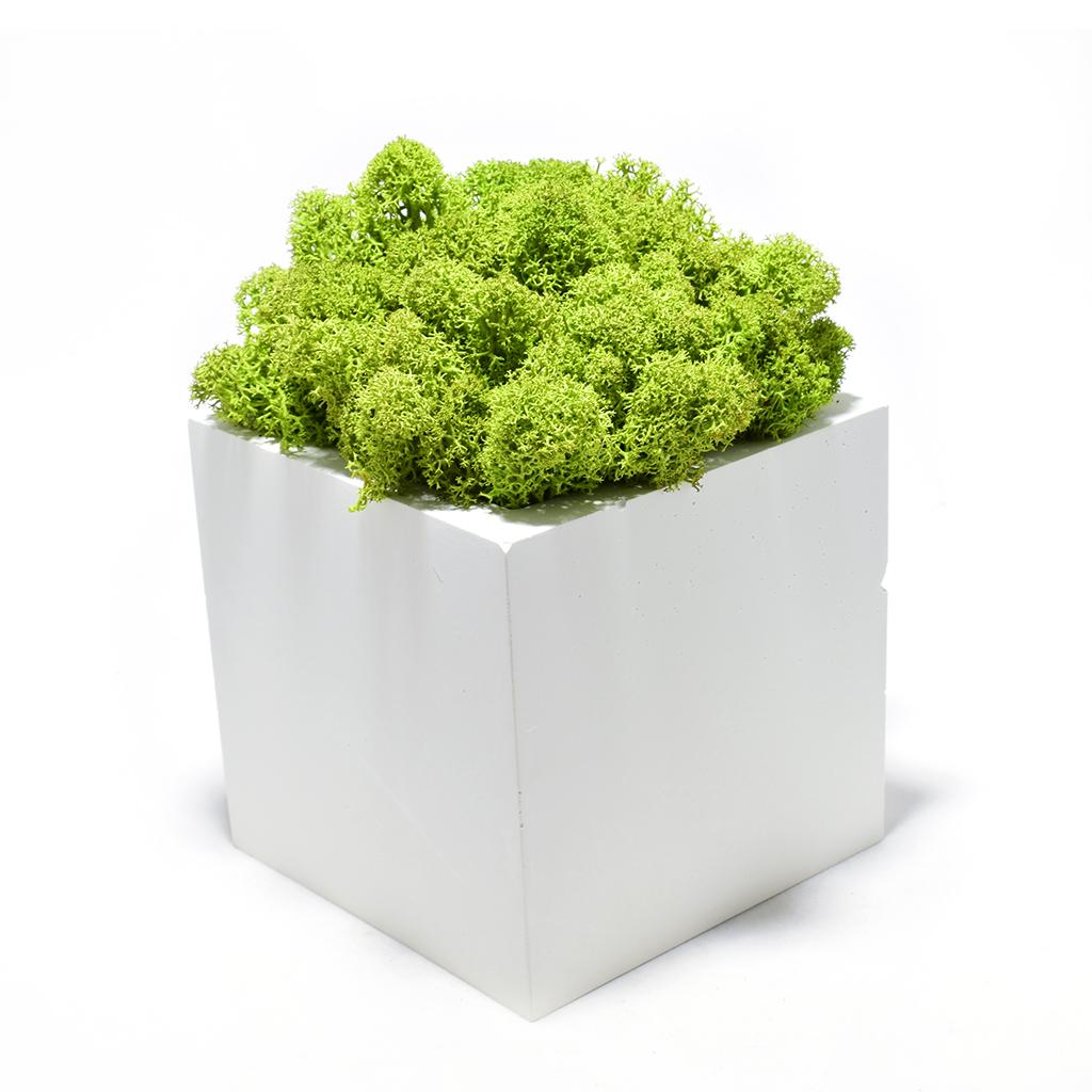 Декоративное кашпо - Куб 3.1+ мох