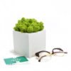 Декоративный мох в горшке купить в Москве интерьере фото