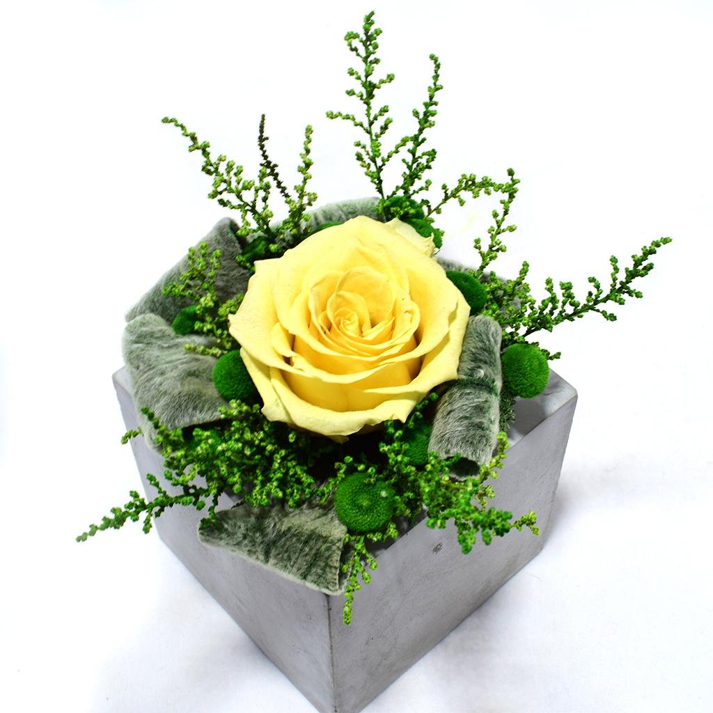 Композиция из цветов - Цефея