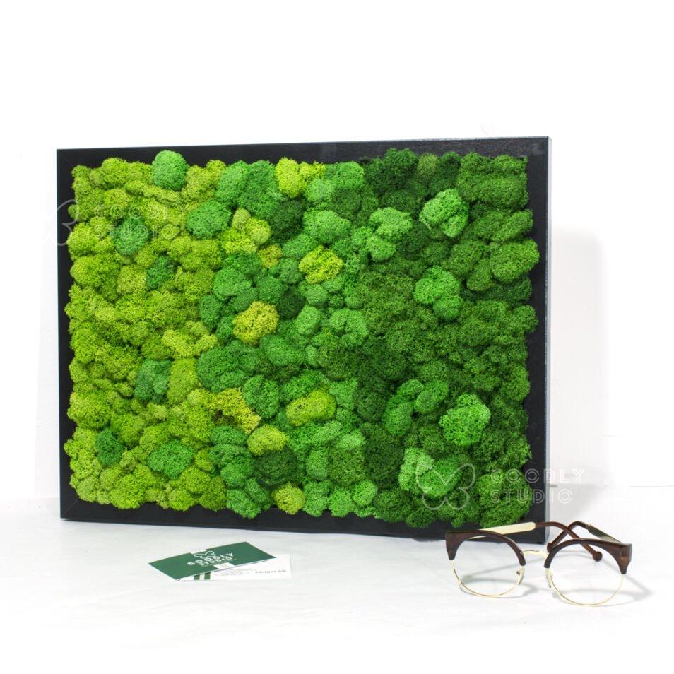 Панно из мха купить стабилизированного на стену фото