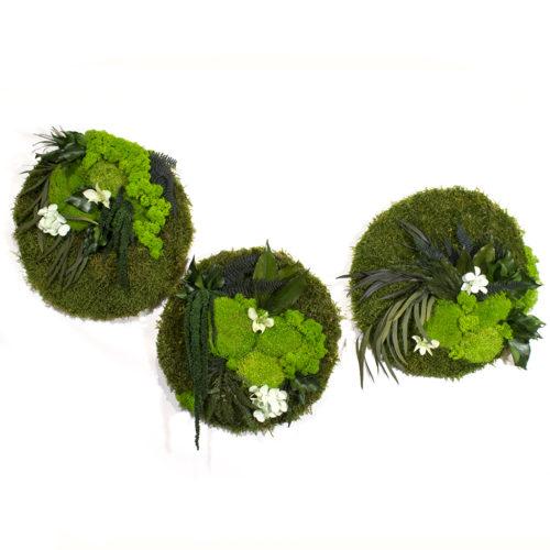 Панно из стабилизированного мха и растений купить