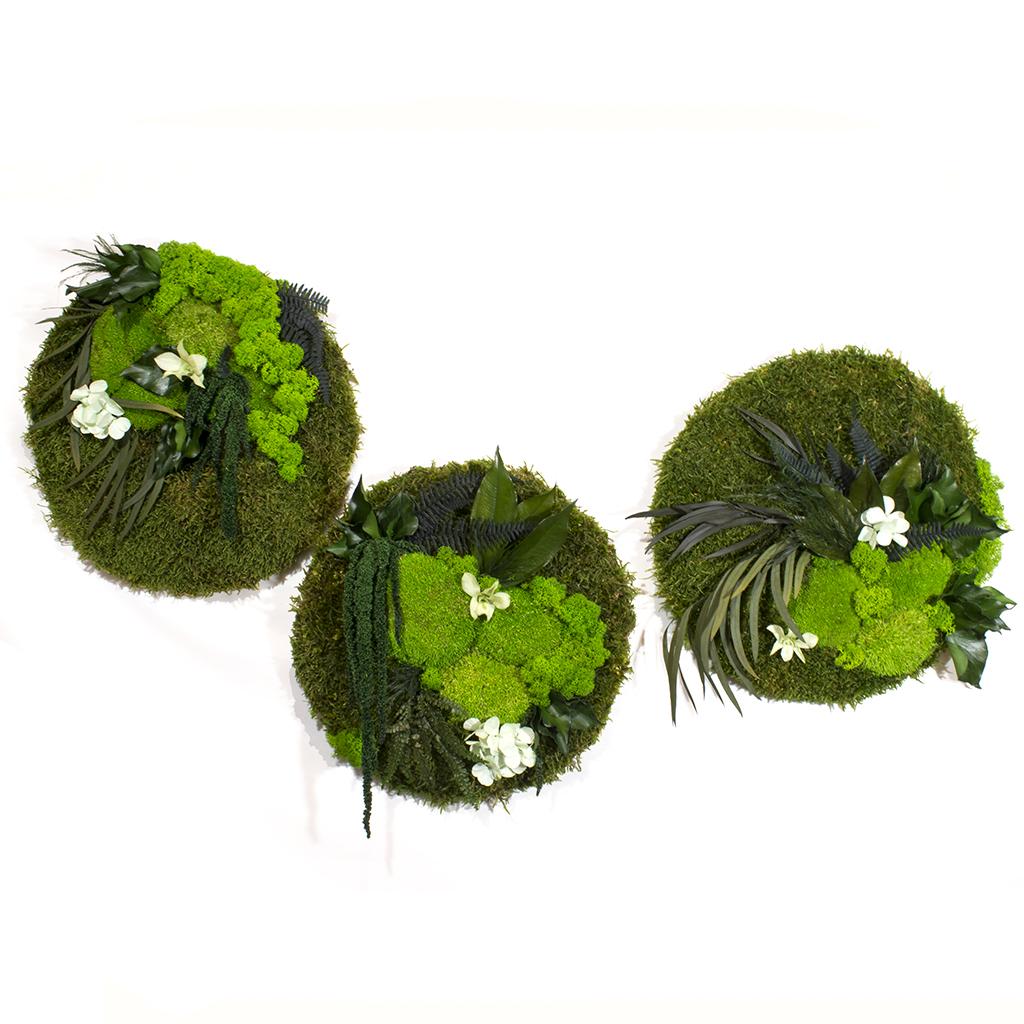 Три панно из стабилизированного мха и растений