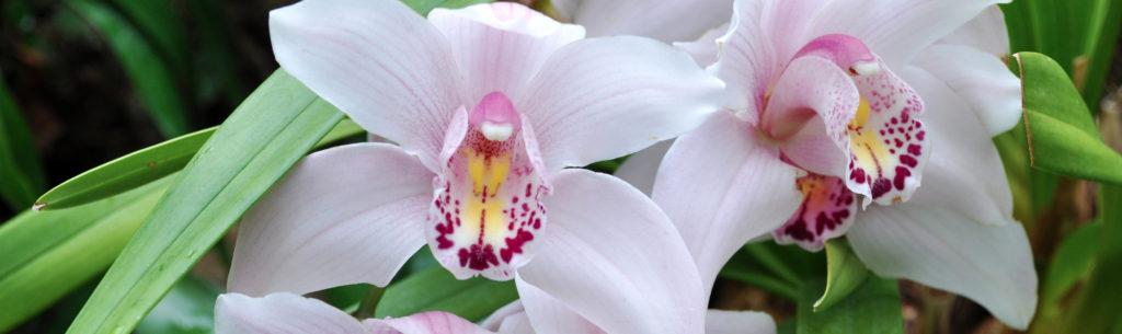 орхидея история одного цветка
