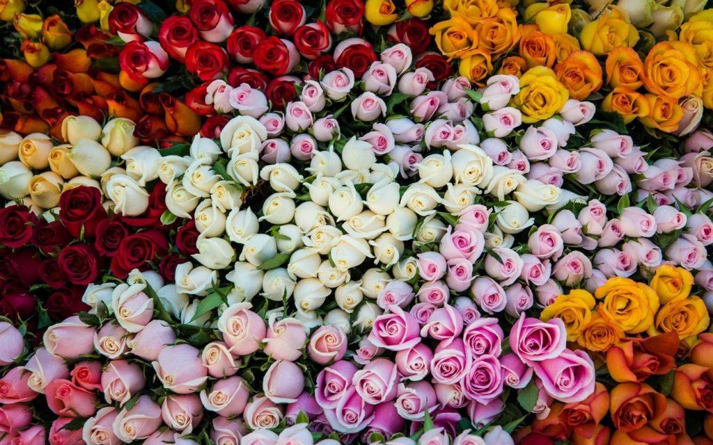 цвет роз на языке цветов