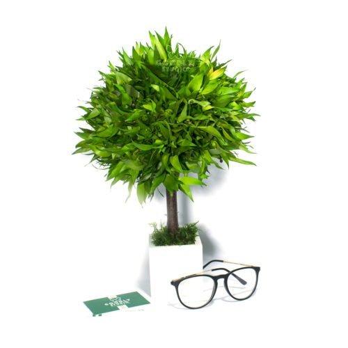 Декоративное дерево для интерьера купить в Москве