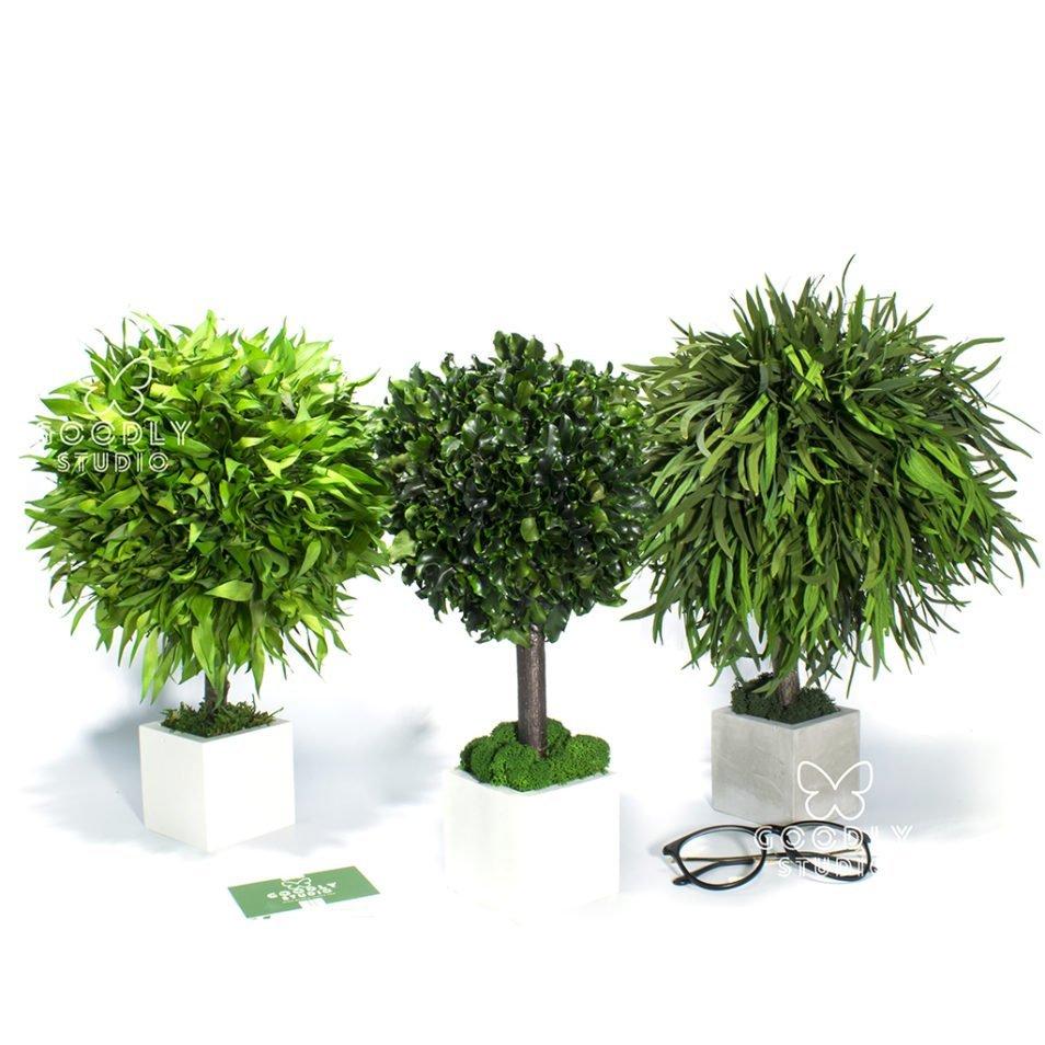 Деревья для интерьера