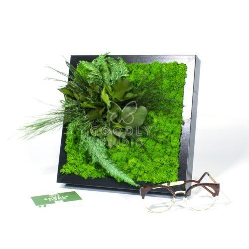 Картина их мха и растений фото