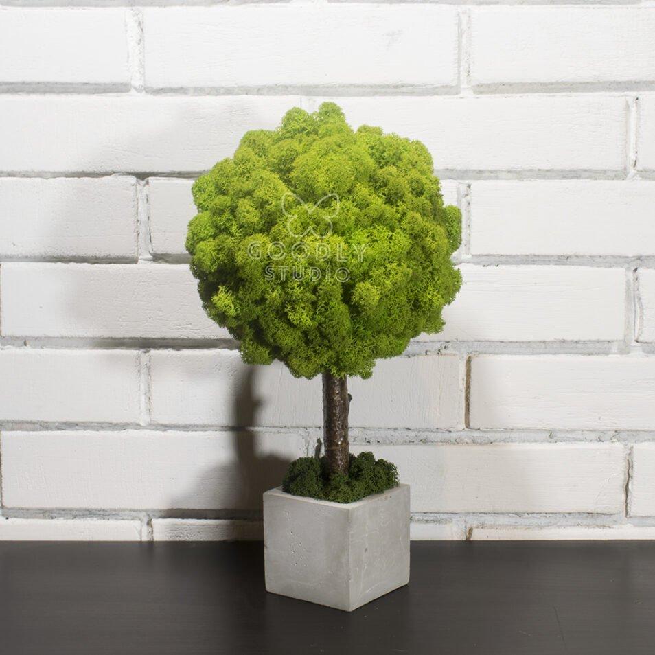 Дерево из мха ягель в бетонном кашпо