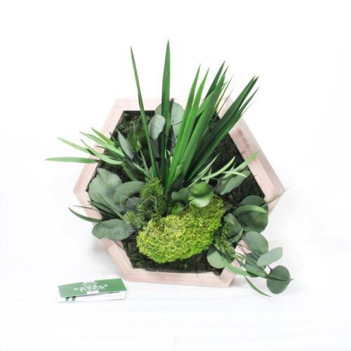 Соты с мхом и растениями