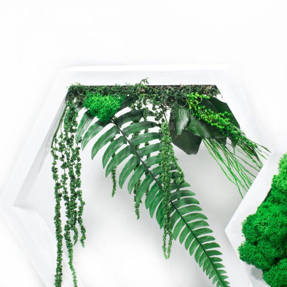 Соты с мхом и стабилизированными растениями