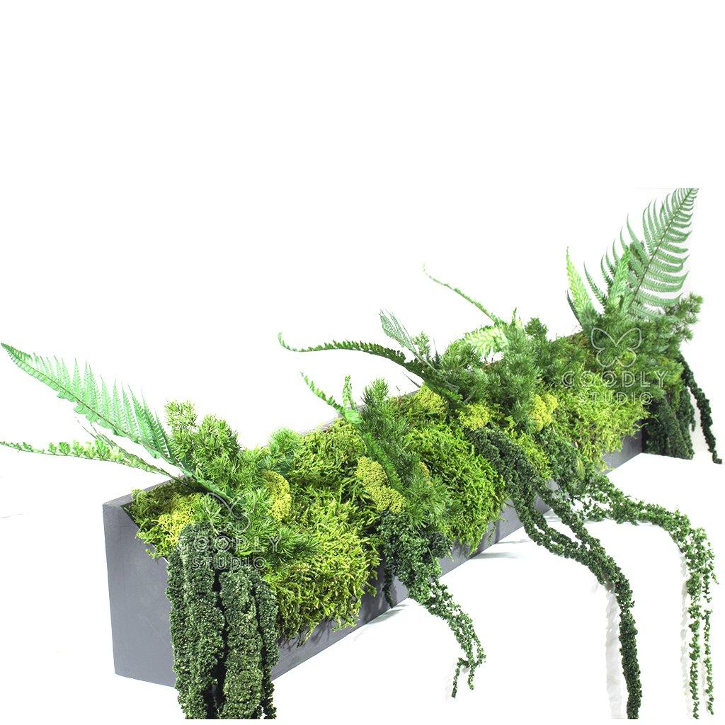Стабилизированные растения в кашпо 1.1
