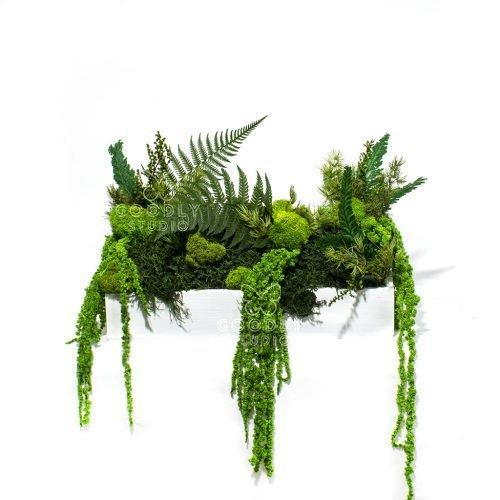 Стабилизированные растения в кашпо