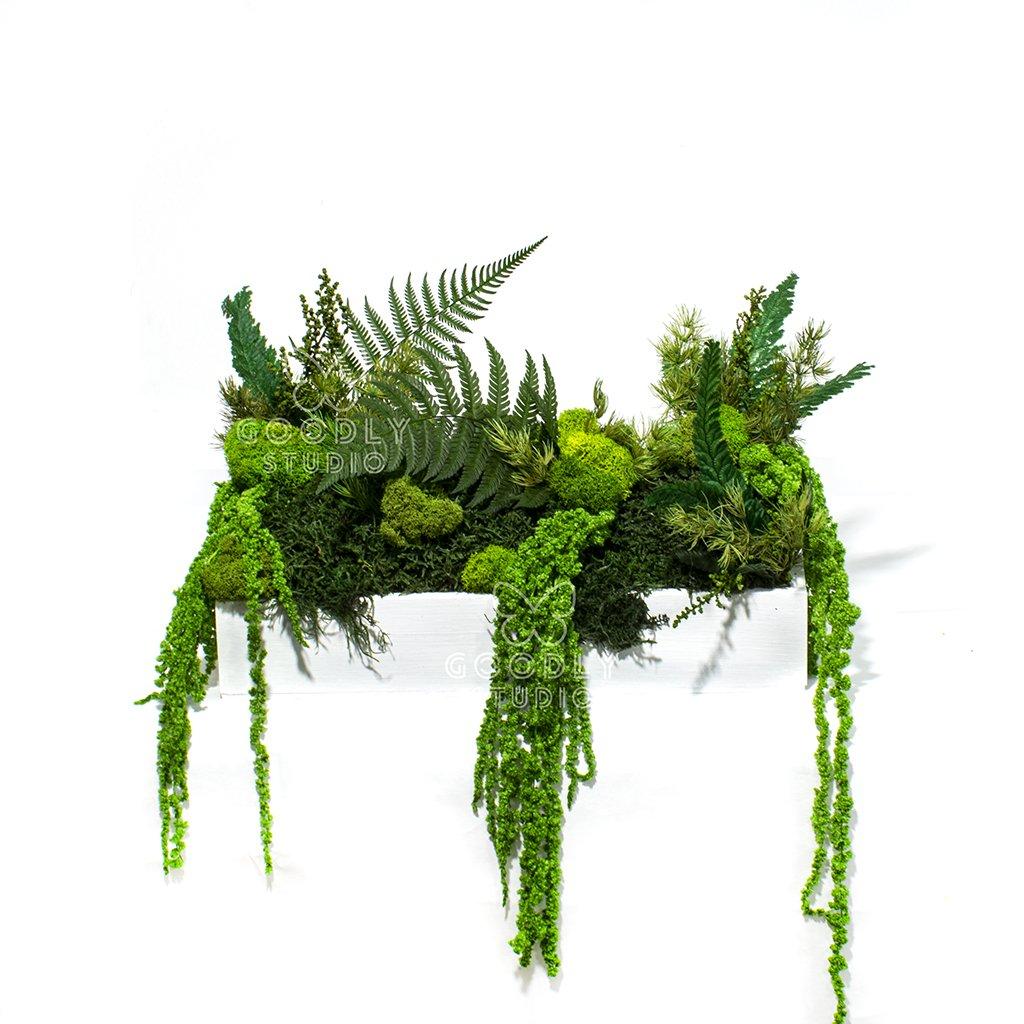 Стабилизированные растения в кашпо 2.0